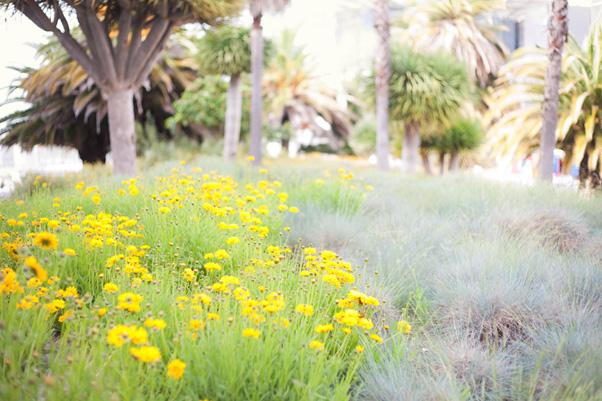 dekoracyjna roślinność w parku narodów w lizbonie