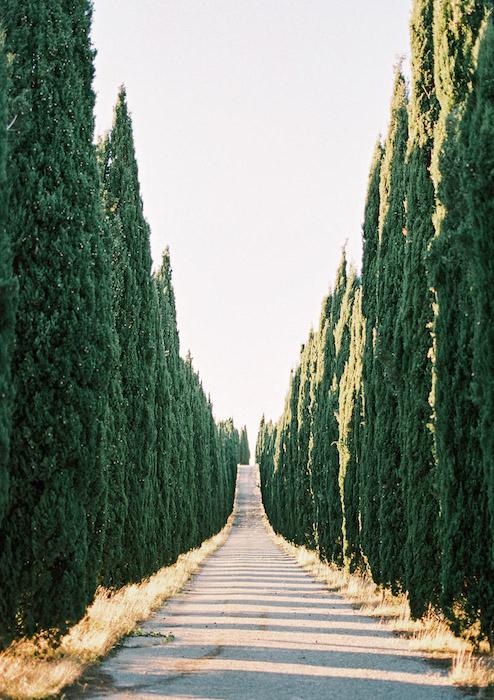 Toskania-Cyprsy-Droga-Włochy-Zachód-Słońca-Fuji-400H